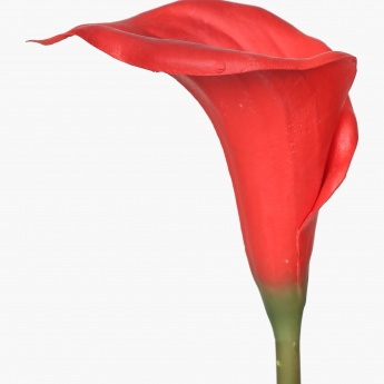 Single Calla Lily Artificial Flower Stem